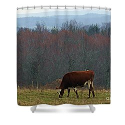 Shower Curtain featuring the photograph Red Holstein Of The Hills by Christian Mattison