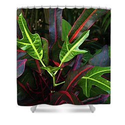 Red Hot And Green Shower Curtain
