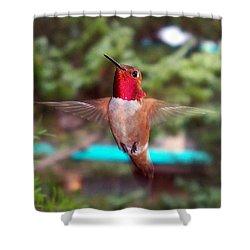 Red Hummingbird Shower Curtain by Joseph Frank Baraba