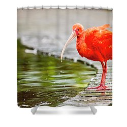 Shower Curtain featuring the photograph Red Ibis by Alexey Stiop