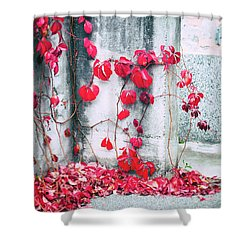 Shower Curtain featuring the photograph Red Ivy Leaves by Silvia Ganora