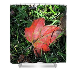Red Leaf Against Green Grass Shower Curtain