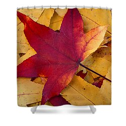 Shower Curtain featuring the photograph Red Leaf by Chevy Fleet