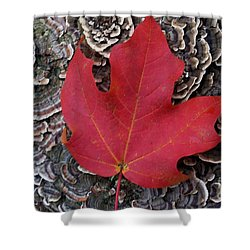 Red Leaf  Shower Curtain by John S