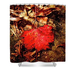 Shower Curtain featuring the photograph Red Leaf by Meta Gatschenberger