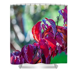 Red Leaves - 9592 Shower Curtain by G L Sarti