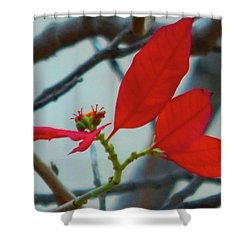 Red Leaves Shower Curtain by Beto Machado