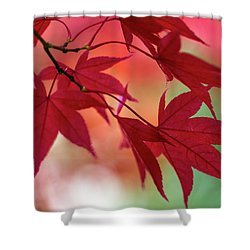 Shower Curtain featuring the photograph Red Leaves by Clare Bambers