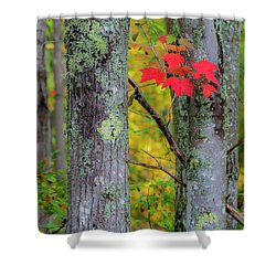 Shower Curtain featuring the photograph Red Leaves by Gary Lengyel