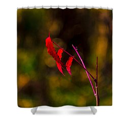 Shower Curtain featuring the photograph Red Leaves by Jay Stockhaus