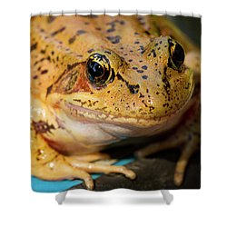 Red Leg Frog Shower Curtain by Jean Noren