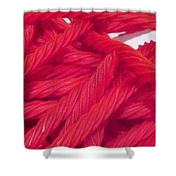 Red Licorice  Shower Curtain