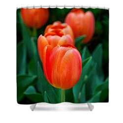 Red Tulips Shower Curtain