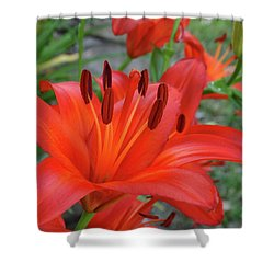 Shower Curtain featuring the photograph Red Lilies by Rebecca Overton
