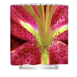 Red Lily Closeup Shower Curtain