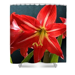 Red Lily Flower Trio Shower Curtain
