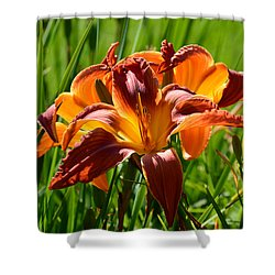 Shower Curtain featuring the photograph Red Lily by Lyle Crump