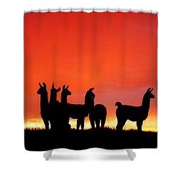 Red Llama Sunset 1 Shower Curtain