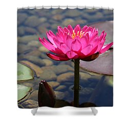 Shower Curtain featuring the photograph Red Lotus by Debra     Vatalaro