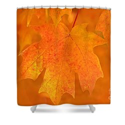 Shower Curtain featuring the photograph Red Maple Autumn by Marion Johnson