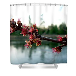 Shower Curtain featuring the photograph Red Maple Buds At Dawn by Kent Lorentzen