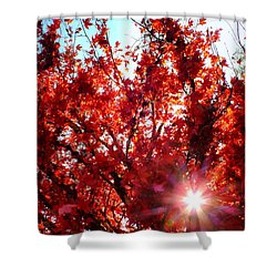 Shower Curtain featuring the photograph Red Maple Burst by Wendy McKennon