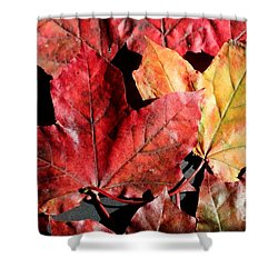 Shower Curtain featuring the photograph Red Maple Leaves Digital Painting by Barbara Griffin