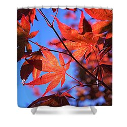 Red Maple Shower Curtain by Rona Black