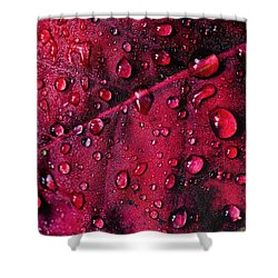 Red Morning Shower Curtain