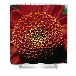 Red Mum Center Shower Curtain by Sally Weigand