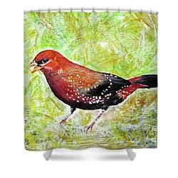 Red Munia Shower Curtain