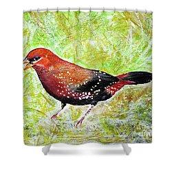 Red Munia Shower Curtain by Jasna Dragun