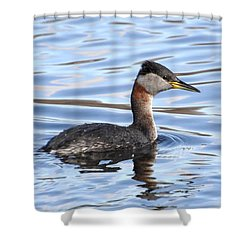 Red-necked Grebe Shower Curtain