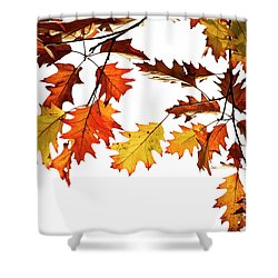 Shower Curtain featuring the photograph Red Oak Leaves In Fall by Tim Gainey
