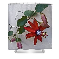 Red On White Shower Curtain by Heiko Koehrer-Wagner
