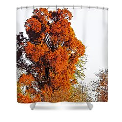 Red-orange Fall Tree Shower Curtain