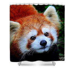 Red Panda Shower Curtain by Davandra Cribbie