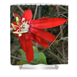 Red Passion Flower Shower Curtain by Mary Haber