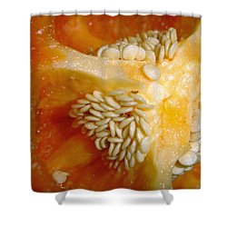 Shower Curtain featuring the photograph Red Pepper by Lynda Lehmann