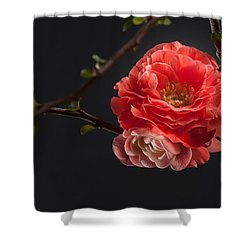 Red Plum In Early Spring Shower Curtain by Catherine Lau