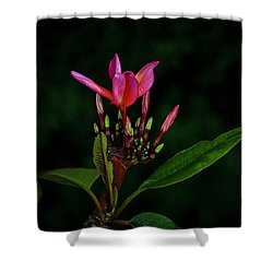 Red Plumeria Shower Curtain