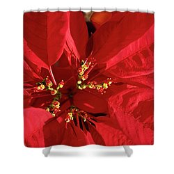 Red Poinsettia Macro Shower Curtain by Sally Weigand