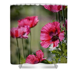 Shower Curtain featuring the photograph Red Poppies by Lisa L Silva