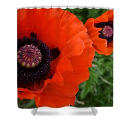 Red Poppies Shower Curtain by Lynne Guimond Sabean