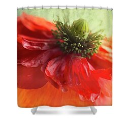 Shower Curtain featuring the photograph Red Poppy by Elena Nosyreva