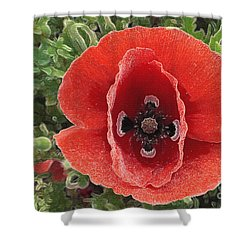 Shower Curtain featuring the photograph Red Poppy Flower 2 by Jean Bernard Roussilhe