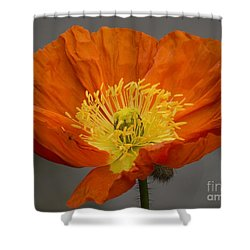 Red Poppy II Shower Curtain