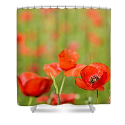Red Poppy In A Field Of Poppies Shower Curtain
