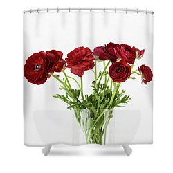 Shower Curtain featuring the photograph Red Ranunculus by Kim Hojnacki