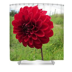 Red, Red, Red Shower Curtain by Jeanette Oberholtzer